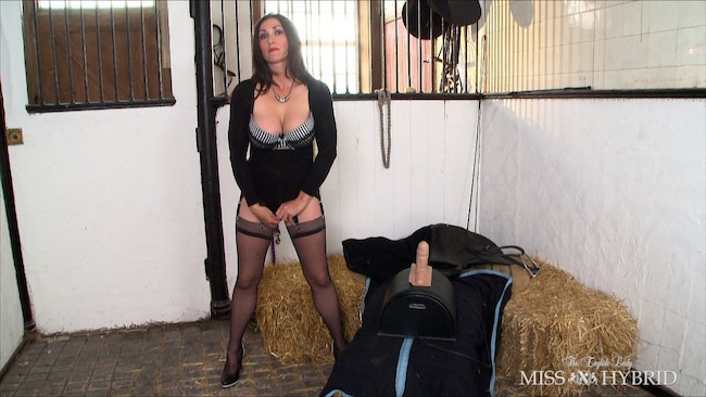 discipline at work, Miss Hybrid, Sybian, stockings, nylons, stilettos, pussy, big cock, stables, equestrian, femdom
